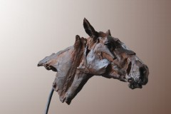Tête de cheval.jpg